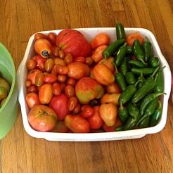 tomatobinsblog4